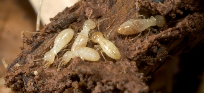 Termite Treatment Delray Beach – Understanding The Best Way To Prevent Termites