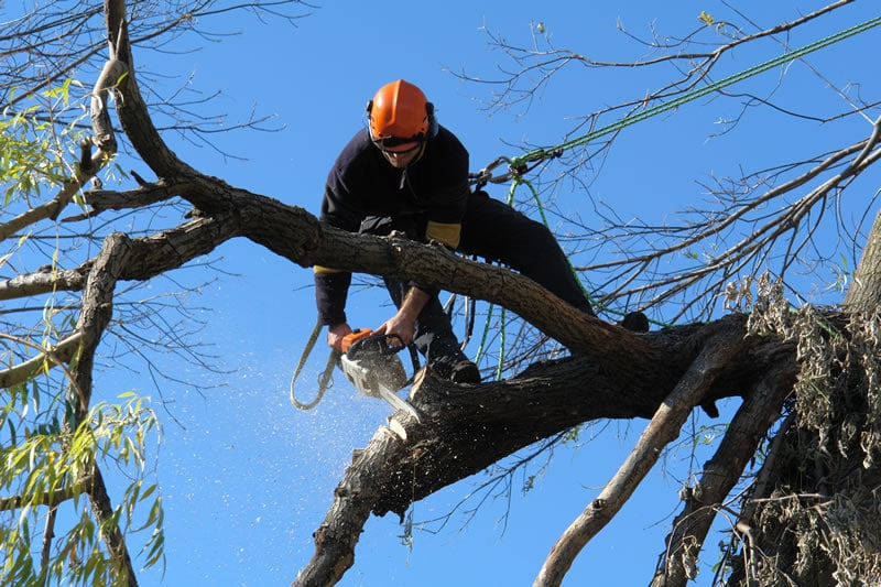 Protect Yourself By Hiring A Professional Tree Surgeon
